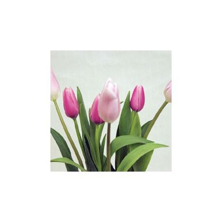Birth Flower TULIP (Feb)