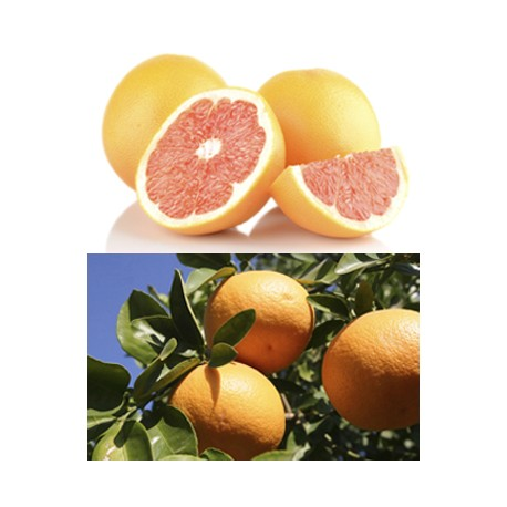 Large Ruby Grapefruits (LLsize) 32pcs