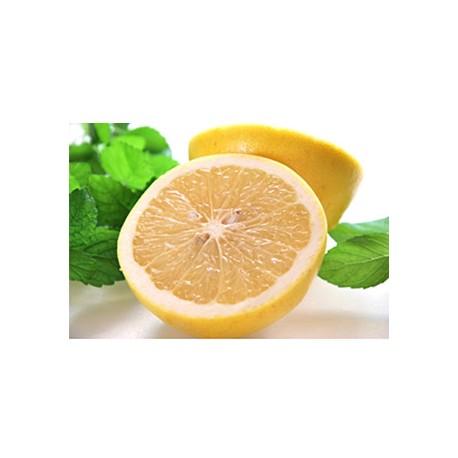 Large White Grapefruits (LLsize) 35pcs