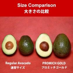 Mexican PROMICH GOLD Avocado (9pcs)