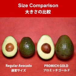 Mexican PROMICH GOLD Avocado (18pcs)