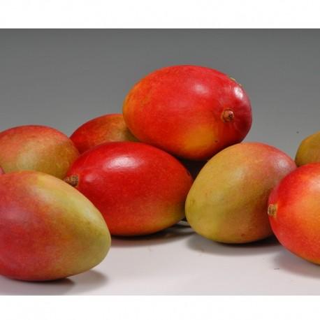 Peruvian Mango 5pcs (Late DEC ~ FEB)