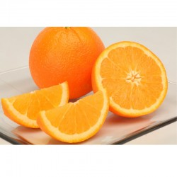 Navel Orange (L size) 20pcs