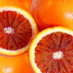ブラッドオレンジ 44玉 (1月下旬~3月)