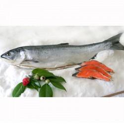 紅塩鮭・尾頭付き姿