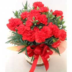 Red Potted Carnation (Mothers Day)