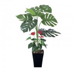 Photocatalyst Monstera & Anthurium Plant
