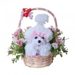 Photocatalyst Carnation White Poodle