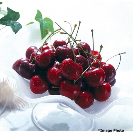 Washington Dark Cherry (2.2lbs)