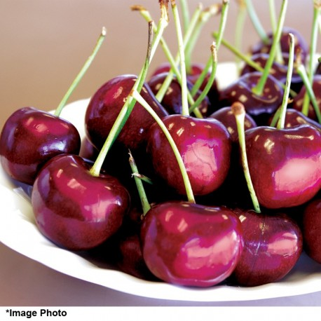 Stemilt Sweetheart Cherry (5.5lbs)