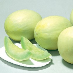 Honeydew Melon 5pcs (Mid AUG~SEP)