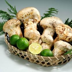 Premium Matsutake Mushrooms (Tsubomi 200g)