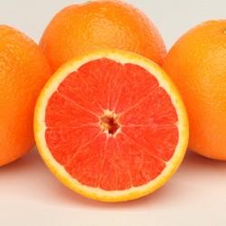 カラカラオレンジ 36玉 (3月)
