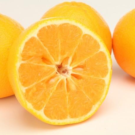Ripe Cocktail Fruits 14~16pcs (Mid DEC~JAN) L Size