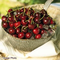 Northwest Dark Cherry 2.2lbs (Web Exclusive)