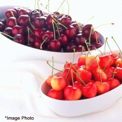 Northwest Dark & Rainier Cherry 4.4lbs (Web Exclusive)
