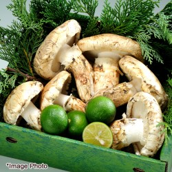 Premium American Matsutake Mix 250g (SEP-OCT)