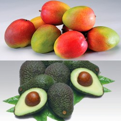 Mango & Avocado Mini Set