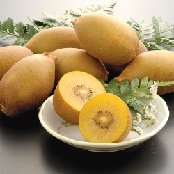 Large Yellow Kiwi Fruits 15pcs