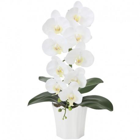 Photocatalyst White Phalaenopsis 1 Plant
