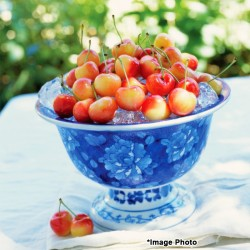 Auvil GEE WHIZ - Rainier Cherry (4.4lbs)