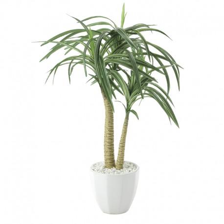 Photocatalyst Yucca Plant