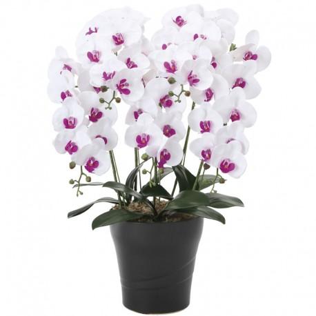 Photocatalyst White Phalaenopsis 5 Plants
