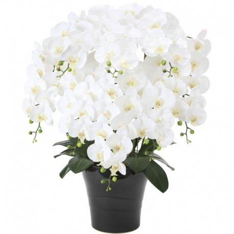 Photocatalyst White Phalaenopsis 8 Plants