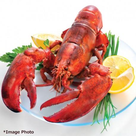 Frozen Homarus Lobster 3pcs