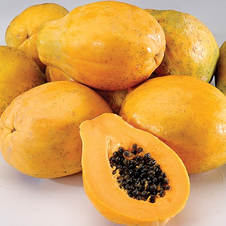 Large Papaya (8~10pcs)