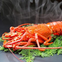 Wild Ise-Ebi Spiny Lobster (Boiled)