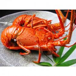 Wild Ise-Ebi Spiny Lobster (Boiled)