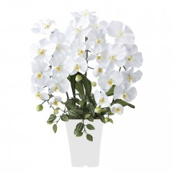 Photocatalyst Refreshing Phalaenopsis White