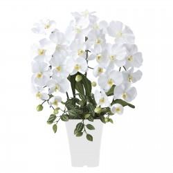 光触媒・さわやかな胡蝶蘭ホワイト