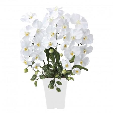 Photocatalyst Refreshing Phalaenopsis White