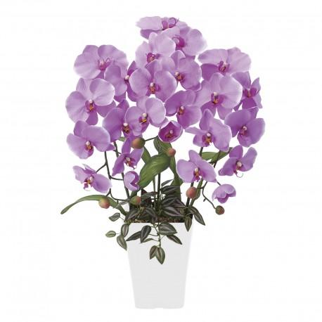 Photocatalyst Refreshing Phalaenopsis Pink