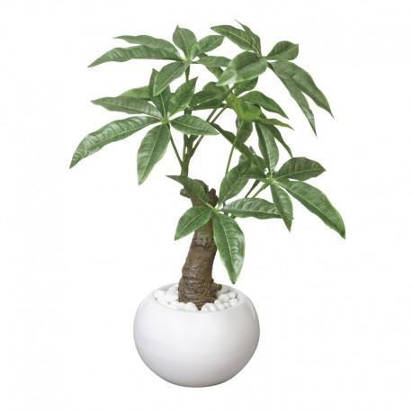Photocatalyst Pachira (White Pot)