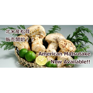 2020 American Matsutake Now Available!!